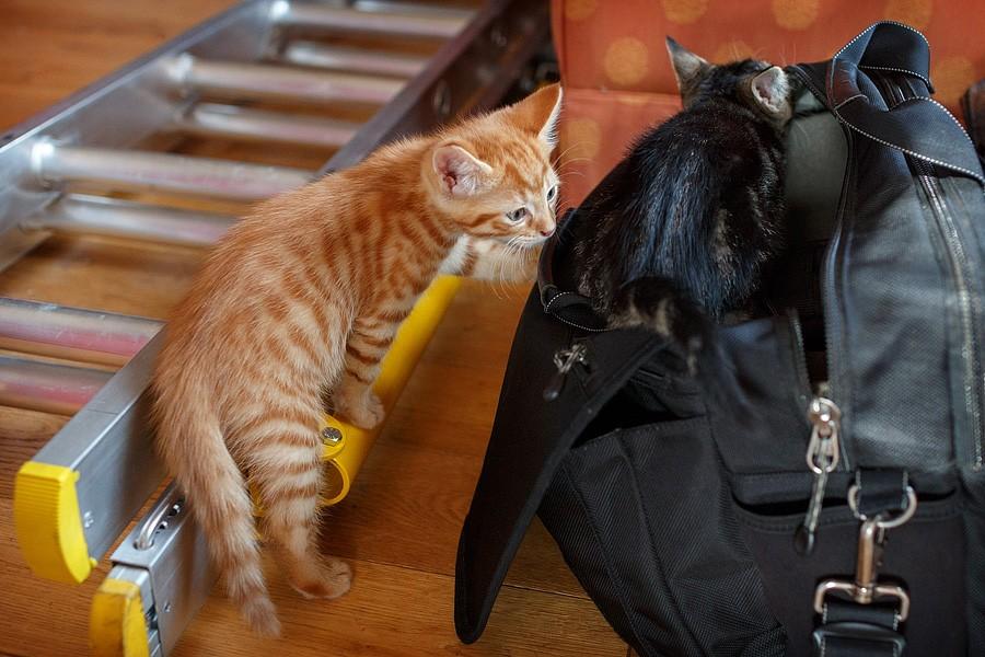 kittens-mar15-014