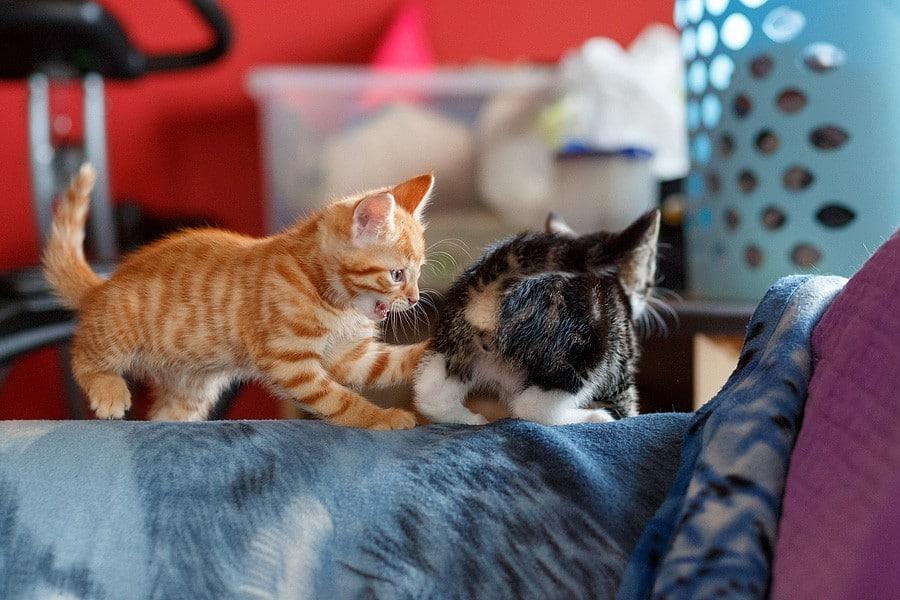 kittens-mar15-021