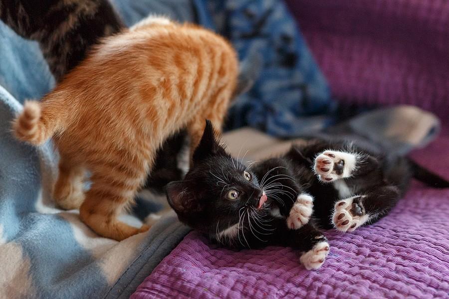 kittens-mar15-024