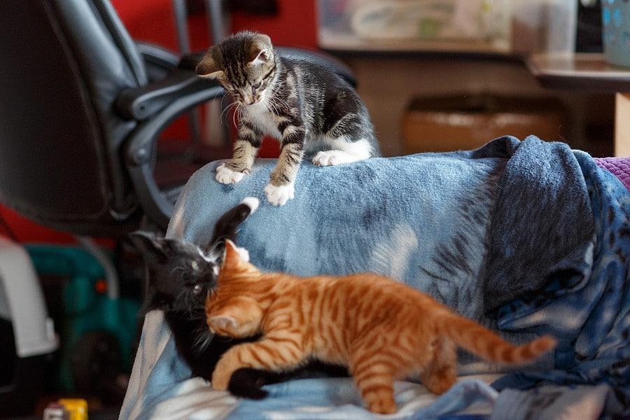kittens-mar15-032