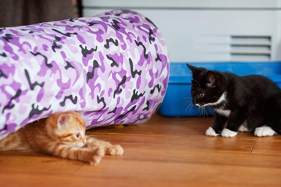 kittens-mar15-036