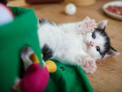 Feline Care Part 6 - Helen's new kittens