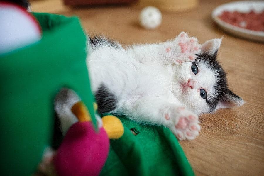 kittens-mar15-042