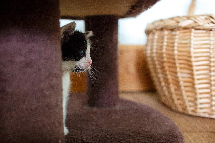 kittens-mar15-045