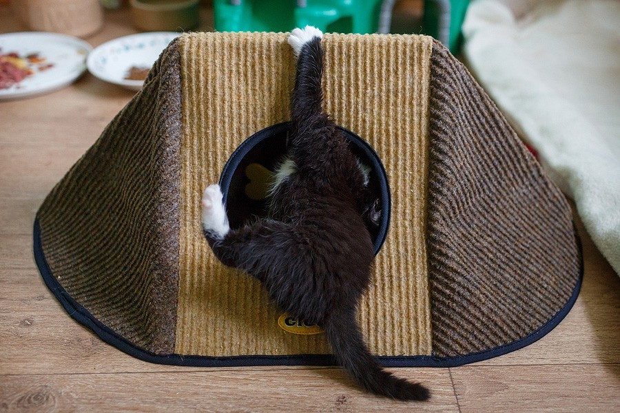 kittens-mar15-051