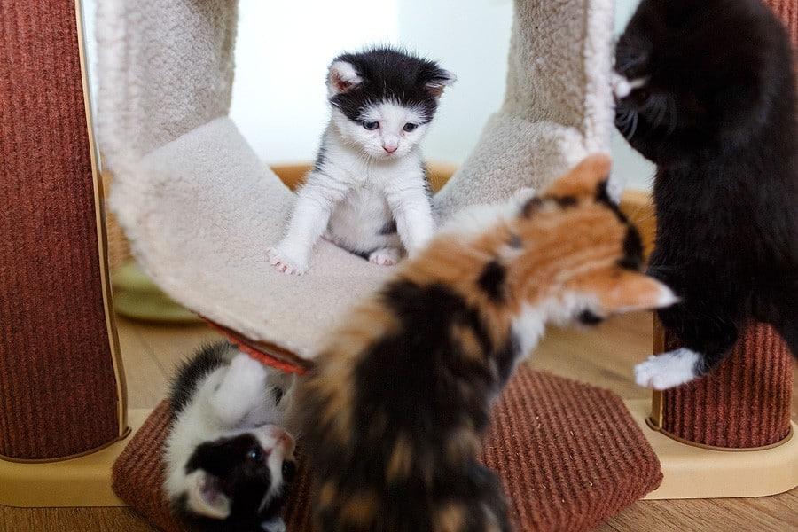 kittens-mar15-060
