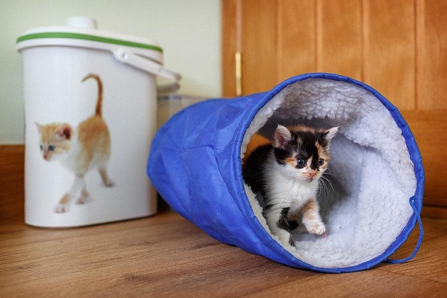 kittens-mar15-063