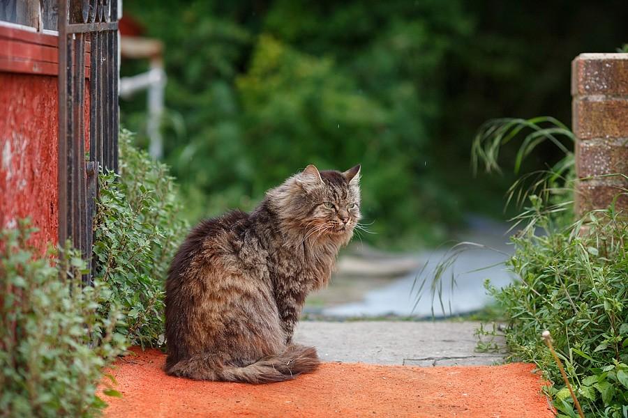 felinecare-may15-001
