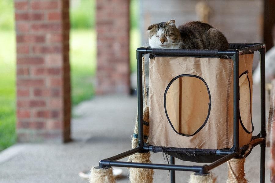 felinecare-may15-010