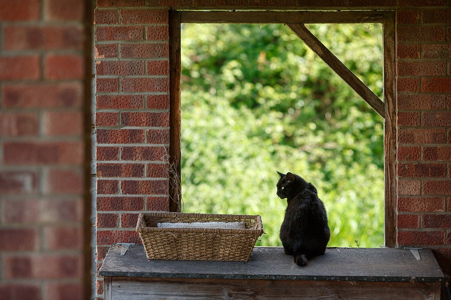 felinecare-may15-013
