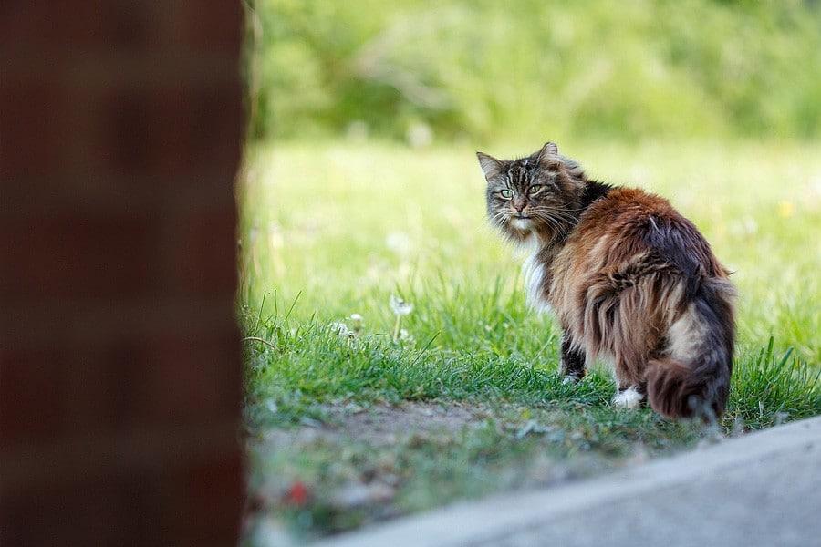 felinecare-may15-020