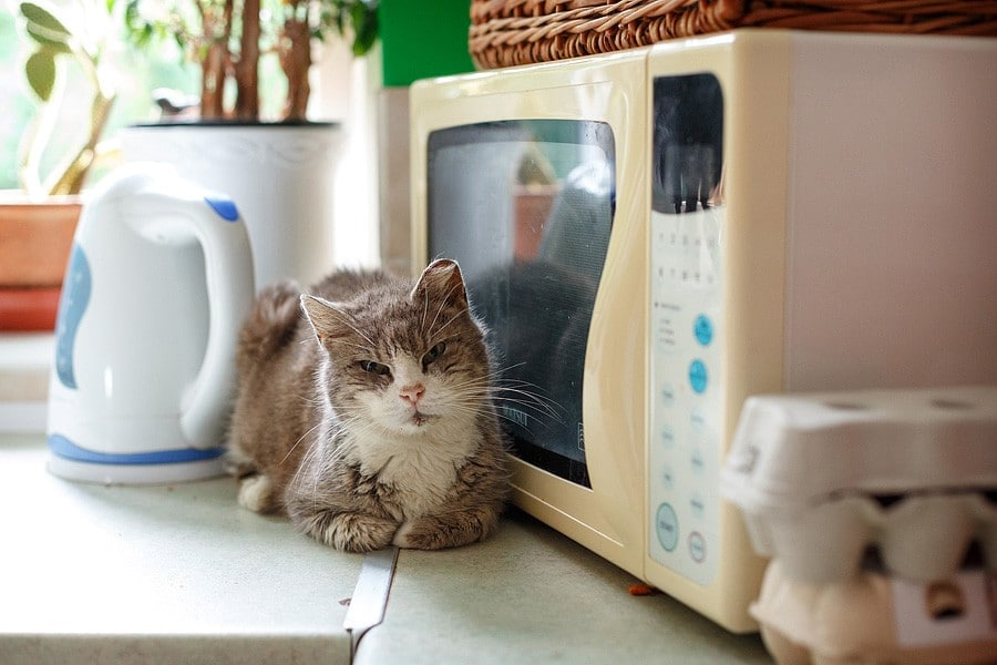 felinecare-may15-025
