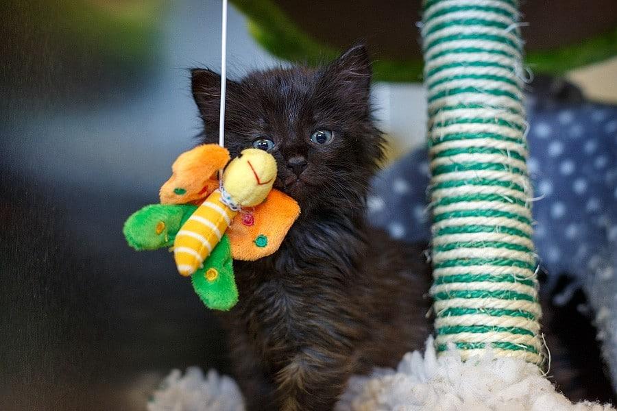 felinecare-may15-030