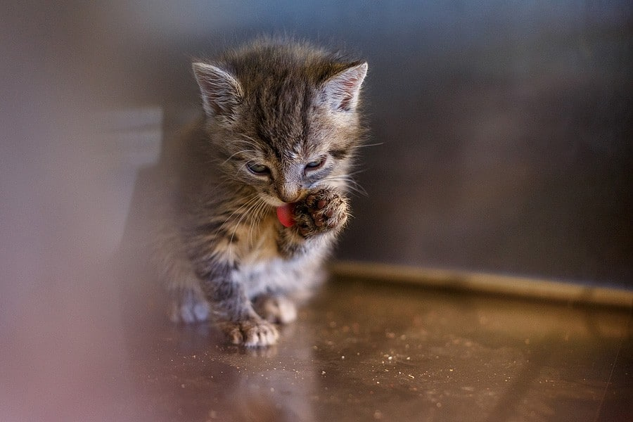 felinecare-may15-034