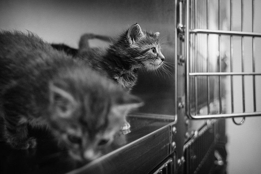 felinecare-may15-035