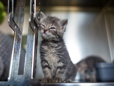 Feline Care Part 7 - May 2015