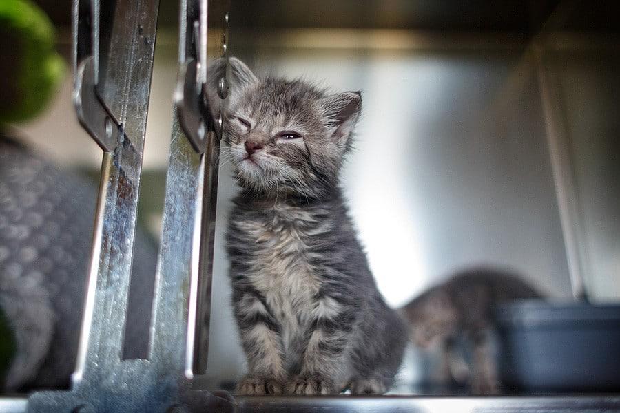felinecare-may15-041