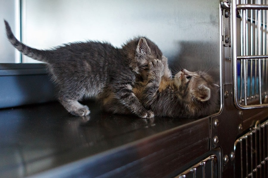 felinecare-may15-045