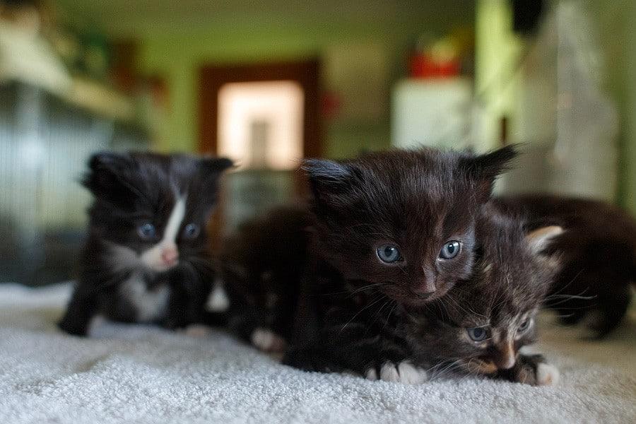 felinecare-may15-050