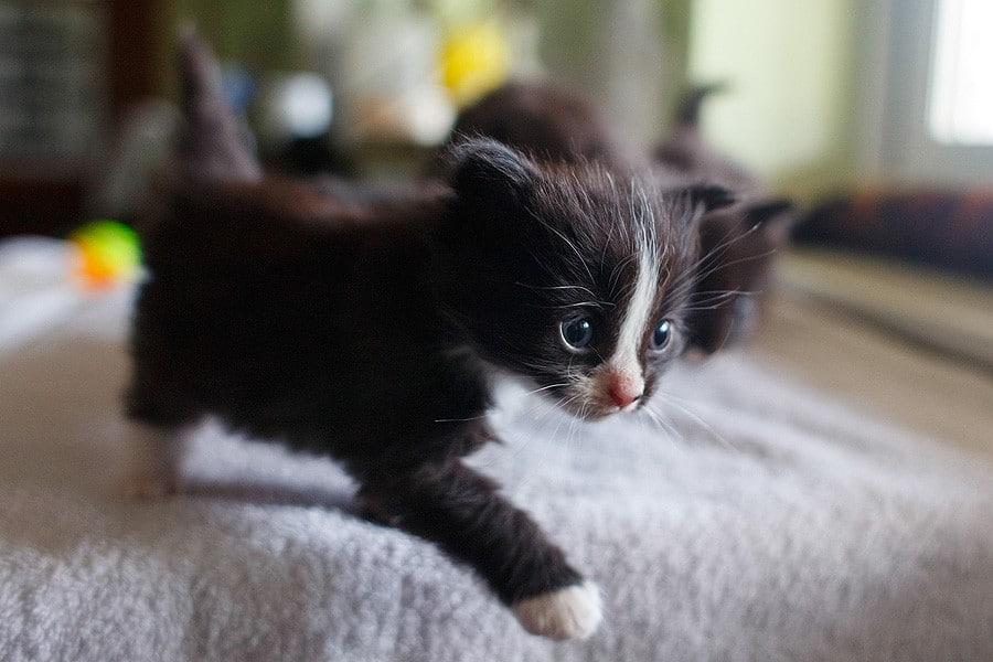 felinecare-may15-057