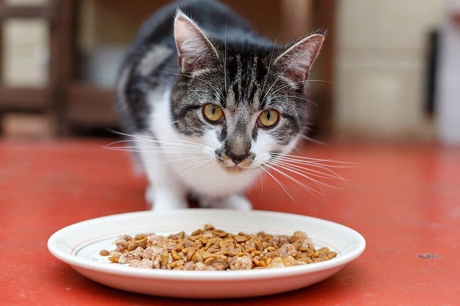 felinecare-may15-075