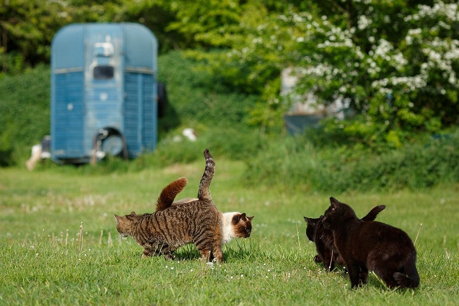 felinecare-may15-080