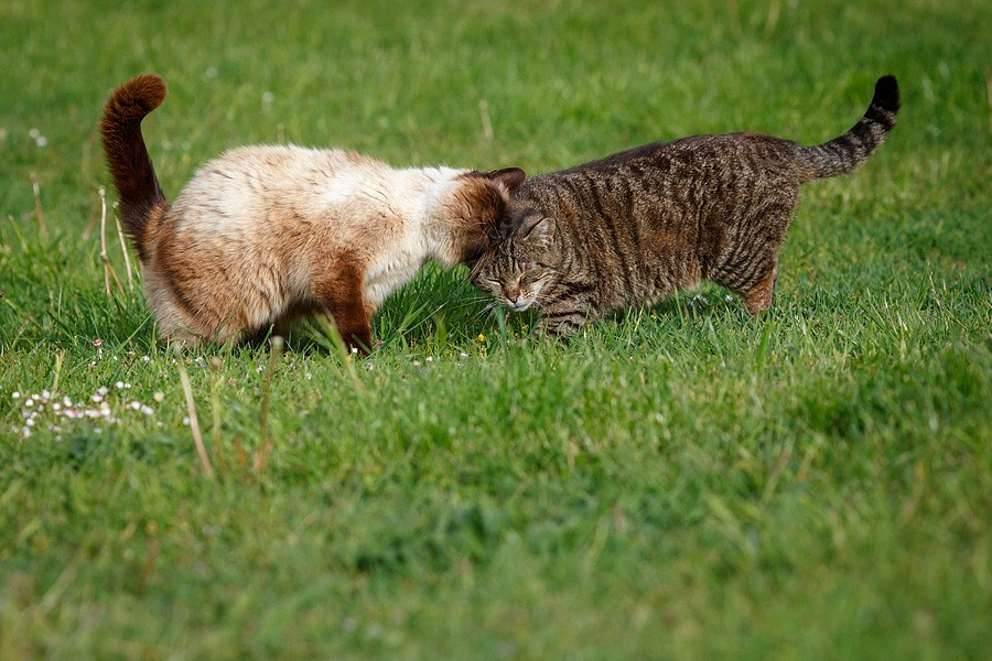 felinecare-may15-082