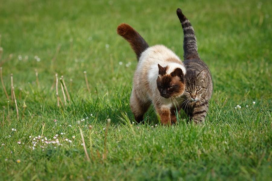 felinecare-may15-083