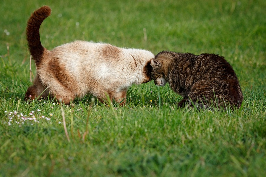 felinecare-may15-085