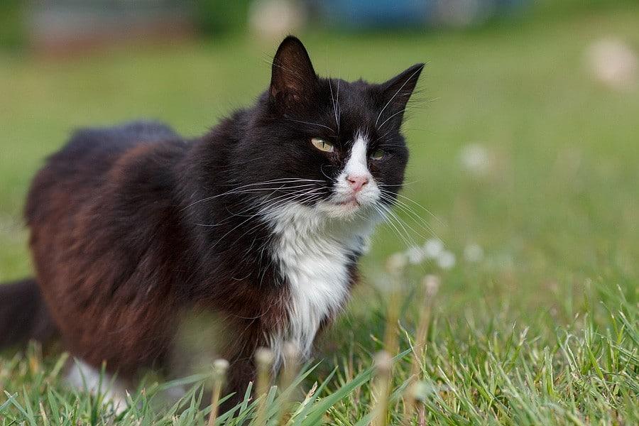 felinecare-may15-087