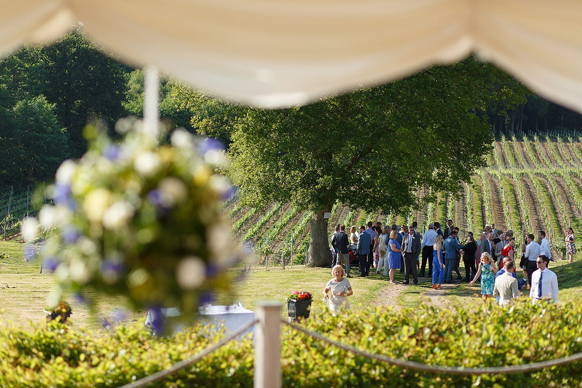 wedding guests mingle in bluebell vineyard