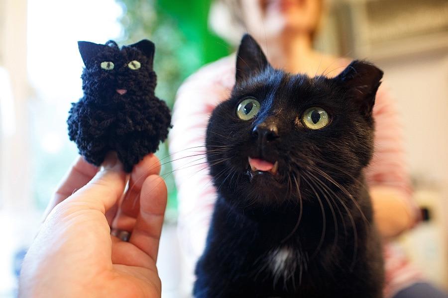 Feline Care Part 2 - December 2014