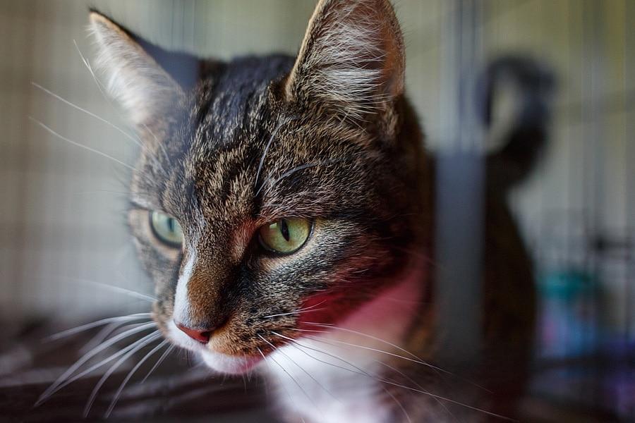 Feline Care Part 3 - January 2015