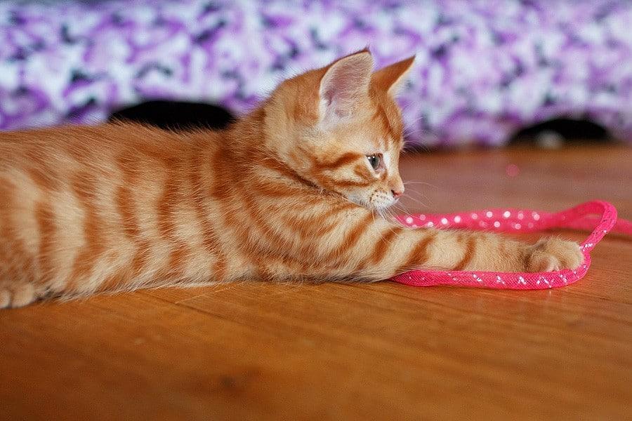 kittens-mar15-011