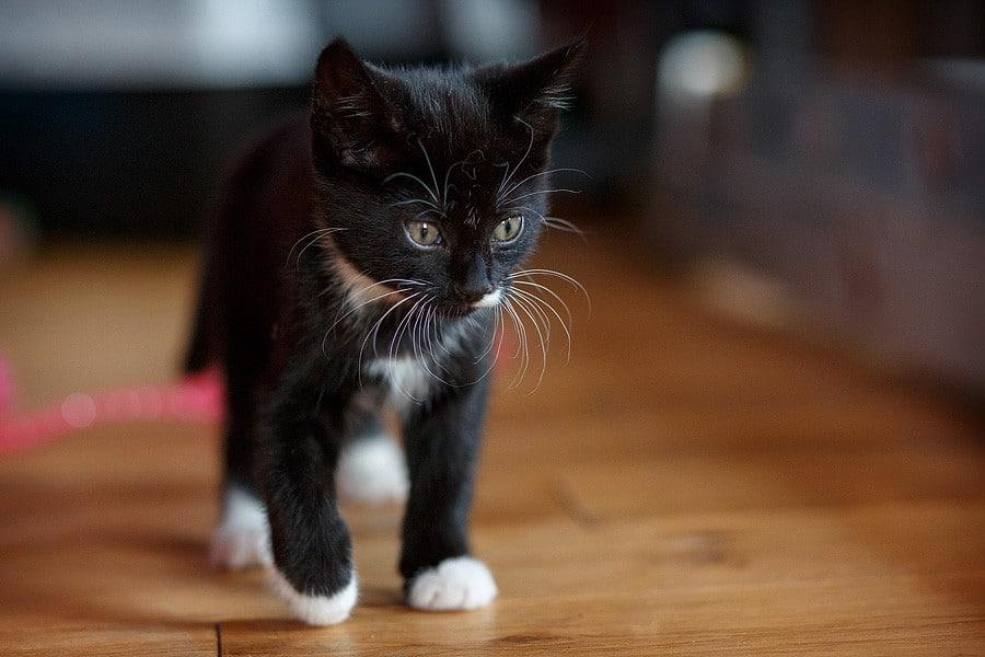 kittens-mar15-017