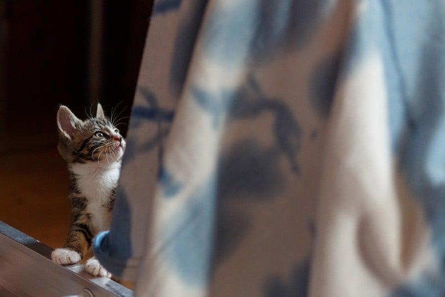 kittens-mar15-026