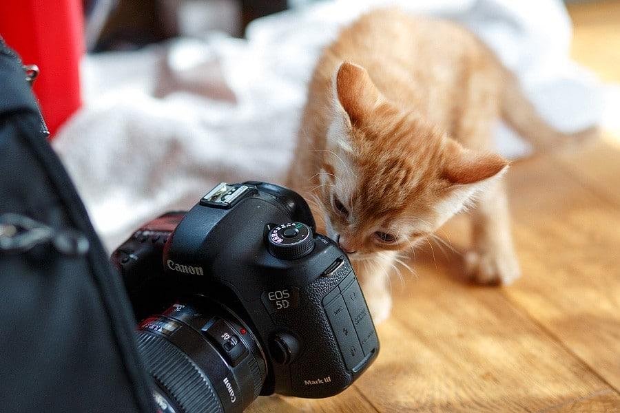 kittens-mar15-028