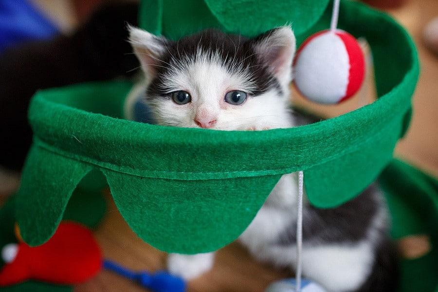 kittens-mar15-041