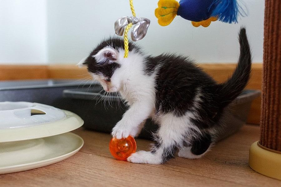 kittens-mar15-046