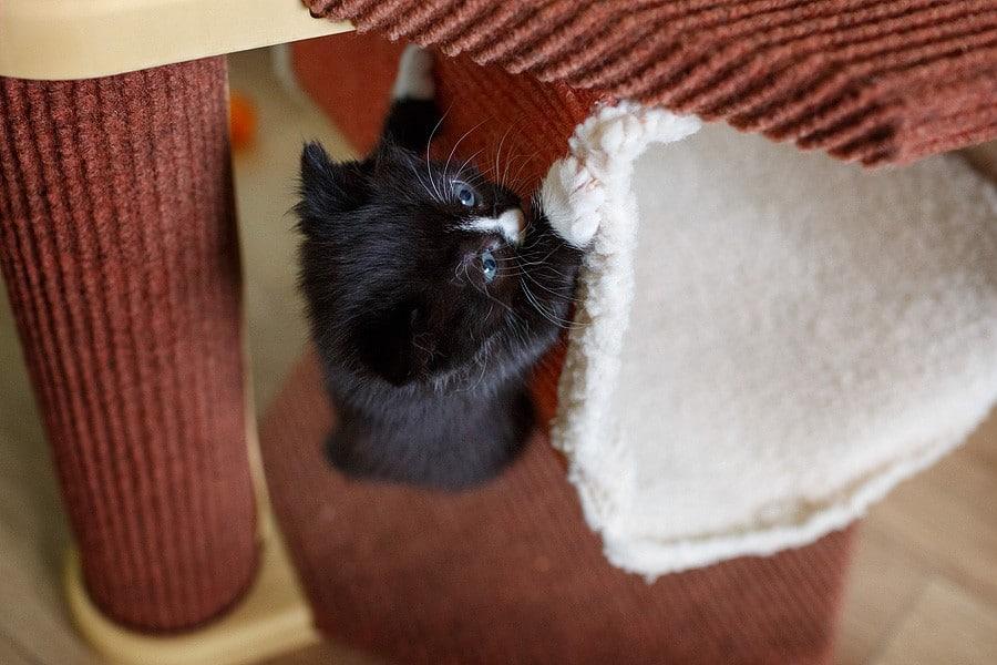 kittens-mar15-049