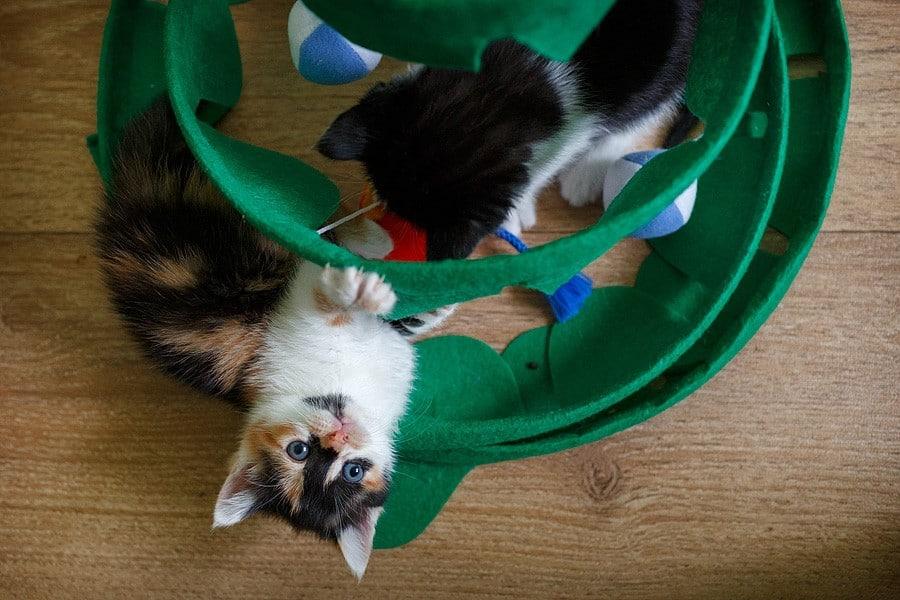 kittens-mar15-050