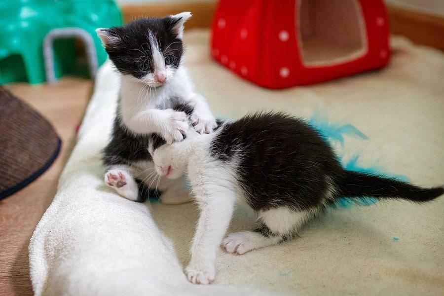 kittens-mar15-053