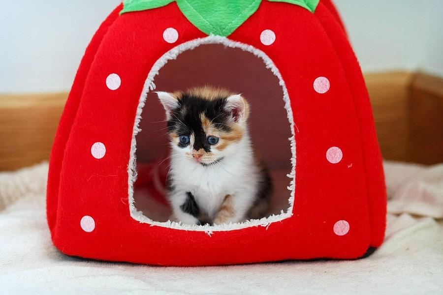 kittens-mar15-067