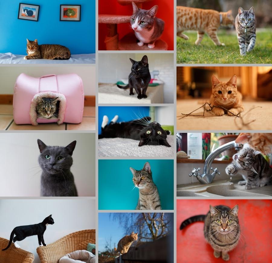 Feline Care Easter Fundraiser