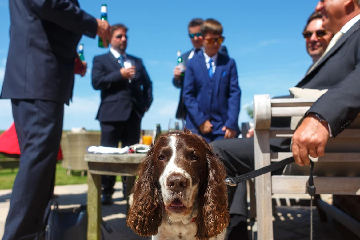 dog at a cley windmill wedding in Norfolk