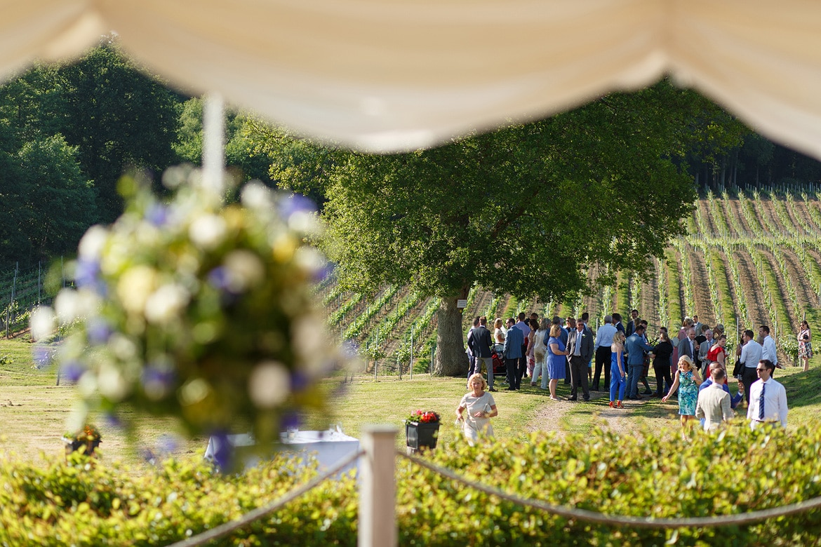 wedding guests at bluebell vineyard
