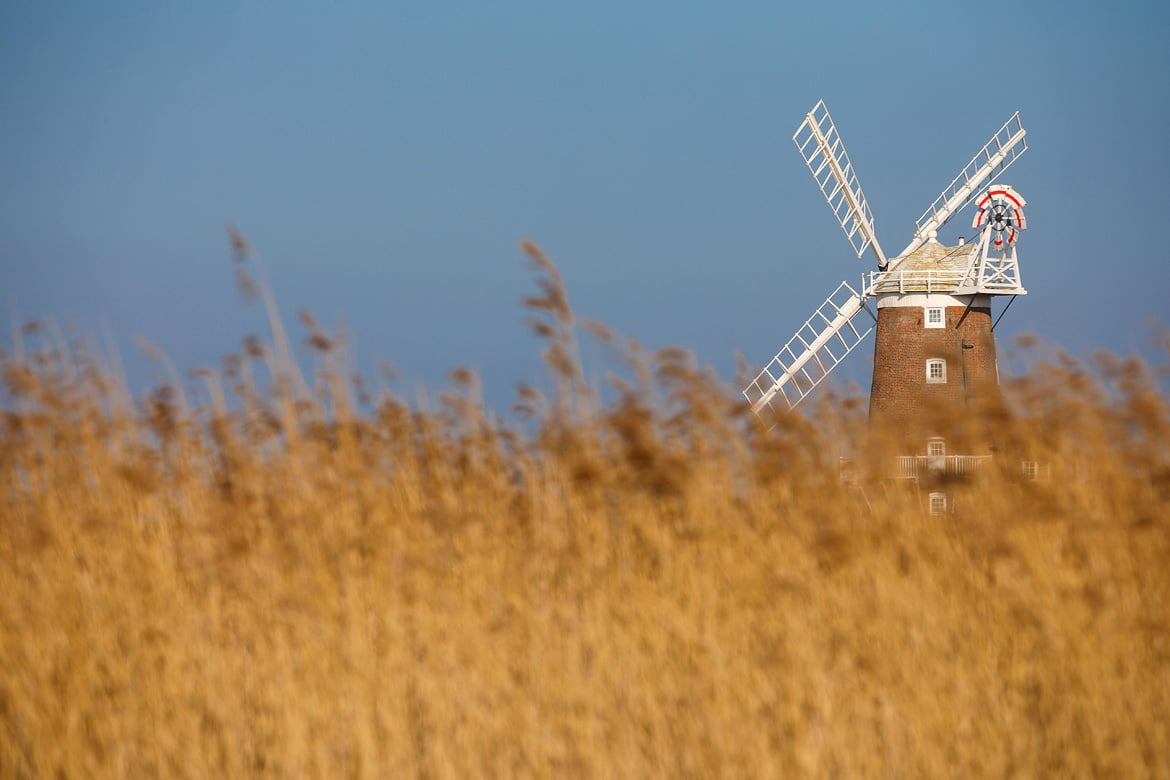 cley windmill seen through the reeds