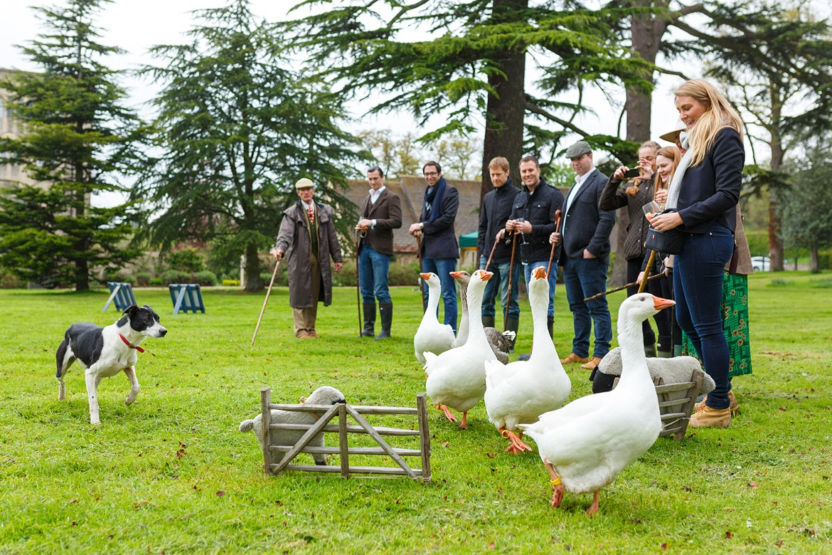 goose herding in ellenborough park