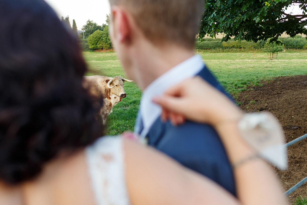 the couple look at some cows