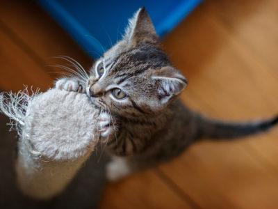 Feline Care Part 8 - Helen's Kittens